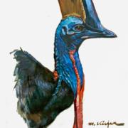 Ausstellung 2012: Helmkasuar