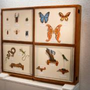 Ausstellung 2014: Insektenkästen