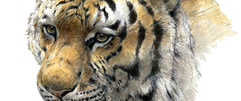 Ausstellung 2015: Sibirische Tigerin, Paschalis Dougalis