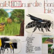 Ausstellung 2019: Nicht nur Honigbien